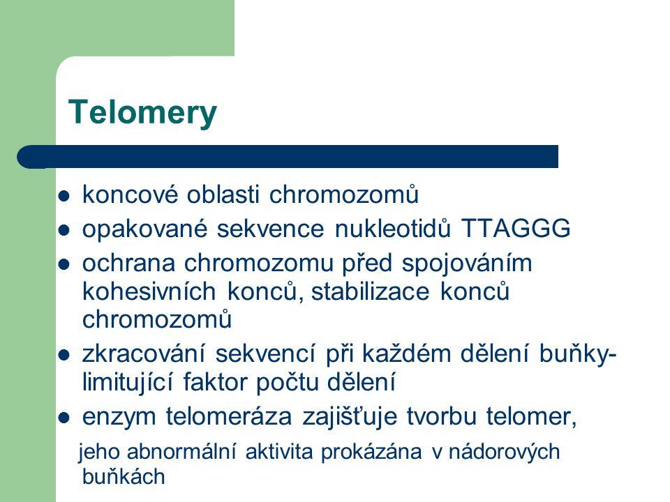Telomery koncové oblasti chromozomů