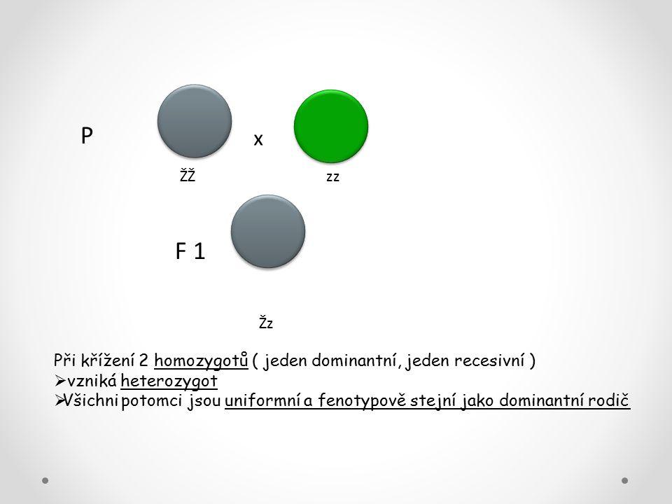 P x. ŽŽ zz. F 1. Žz. Při křížení 2 homozygotů ( jeden dominantní, jeden recesivní )