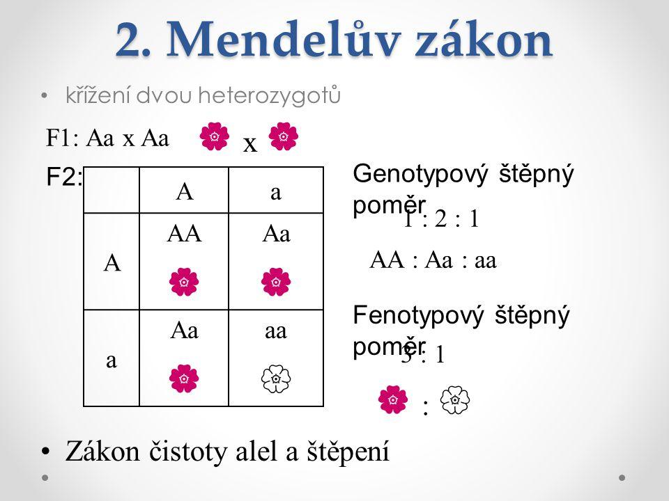 2. Mendelův zákon  x     :  Zákon čistoty alel a štěpení