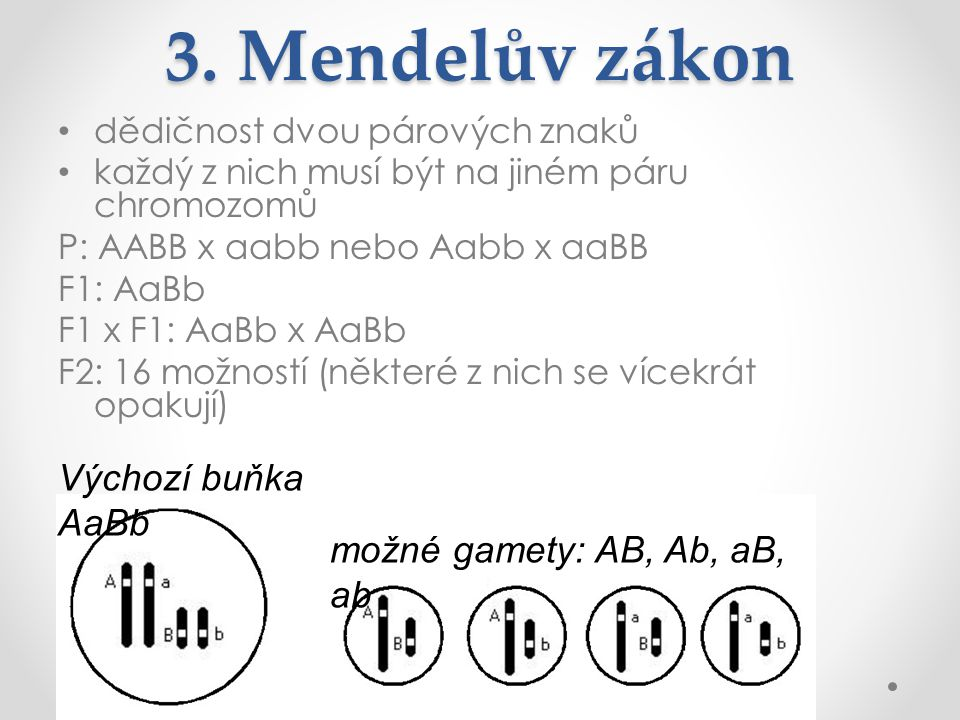 3. Mendelův zákon Výchozí buňka AaBb možné gamety: AB, Ab, aB, ab