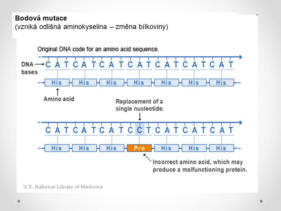 Bodová mutace (vzniká odlišná aminokyselina – změna bílkoviny)