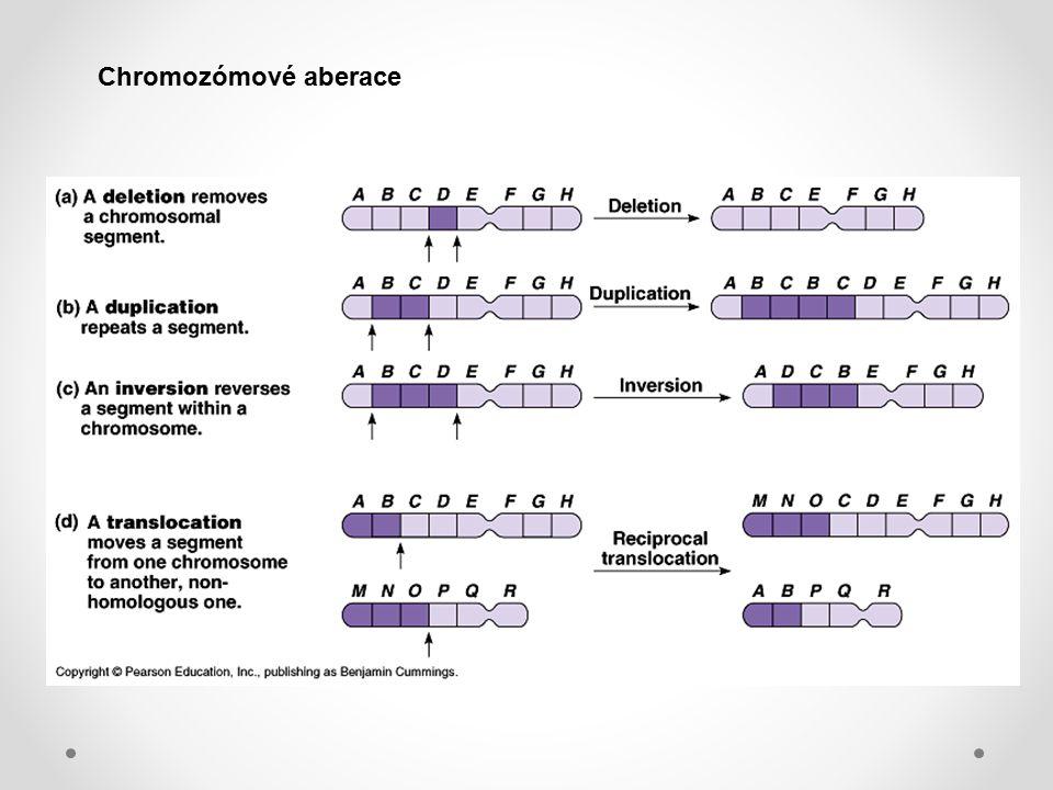 Chromozómové aberace