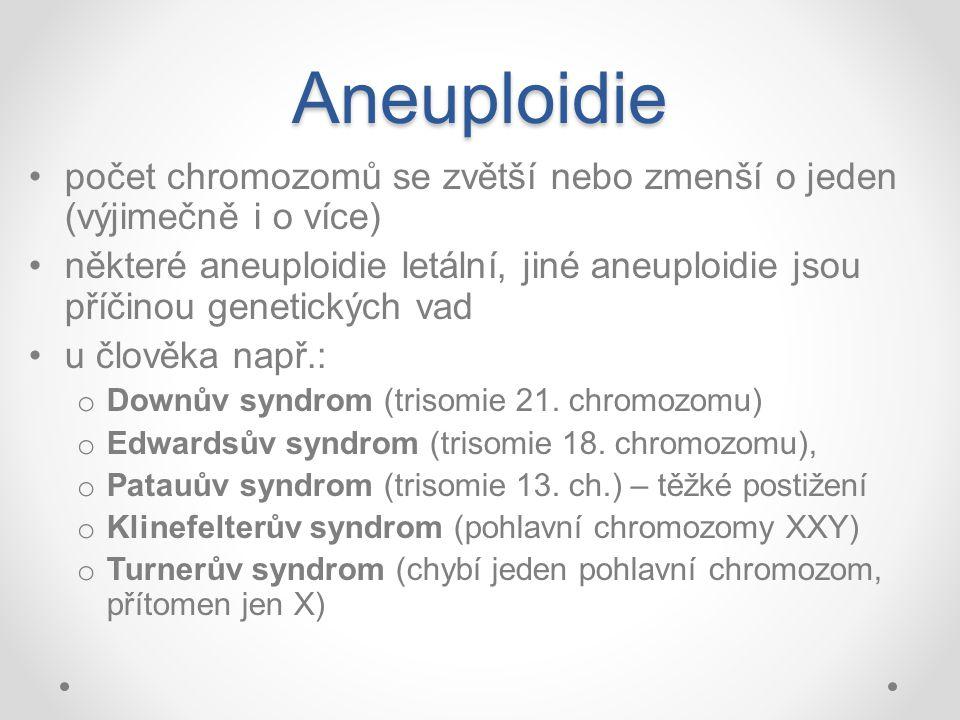Aneuploidie počet chromozomů se zvětší nebo zmenší o jeden (výjimečně i o více)