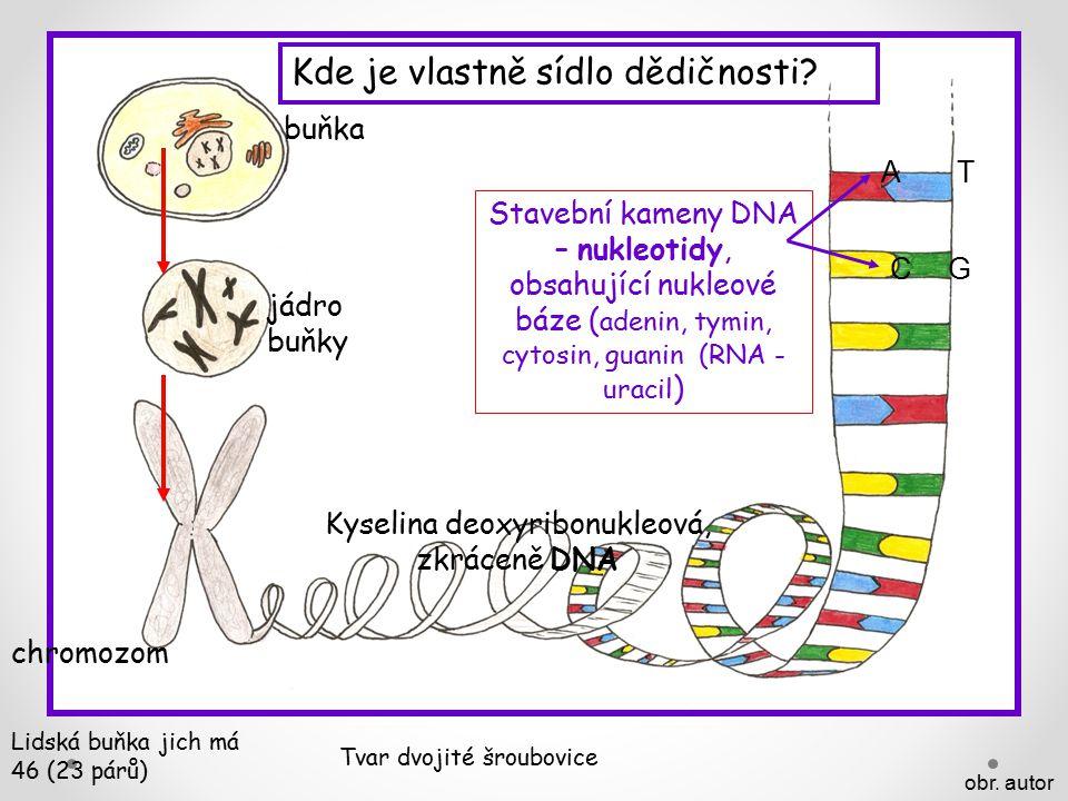 Kyselina deoxyribonukleová, zkráceně DNA