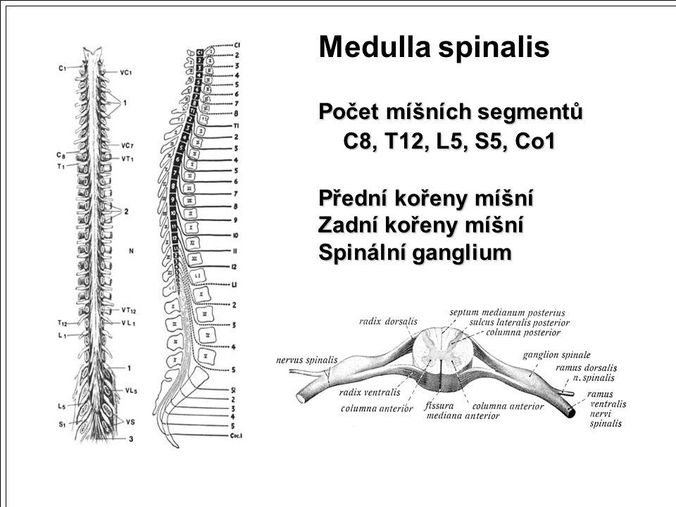 Medulla spinalis Počet míšních segmentů C8, T12, L5, S5, Co1