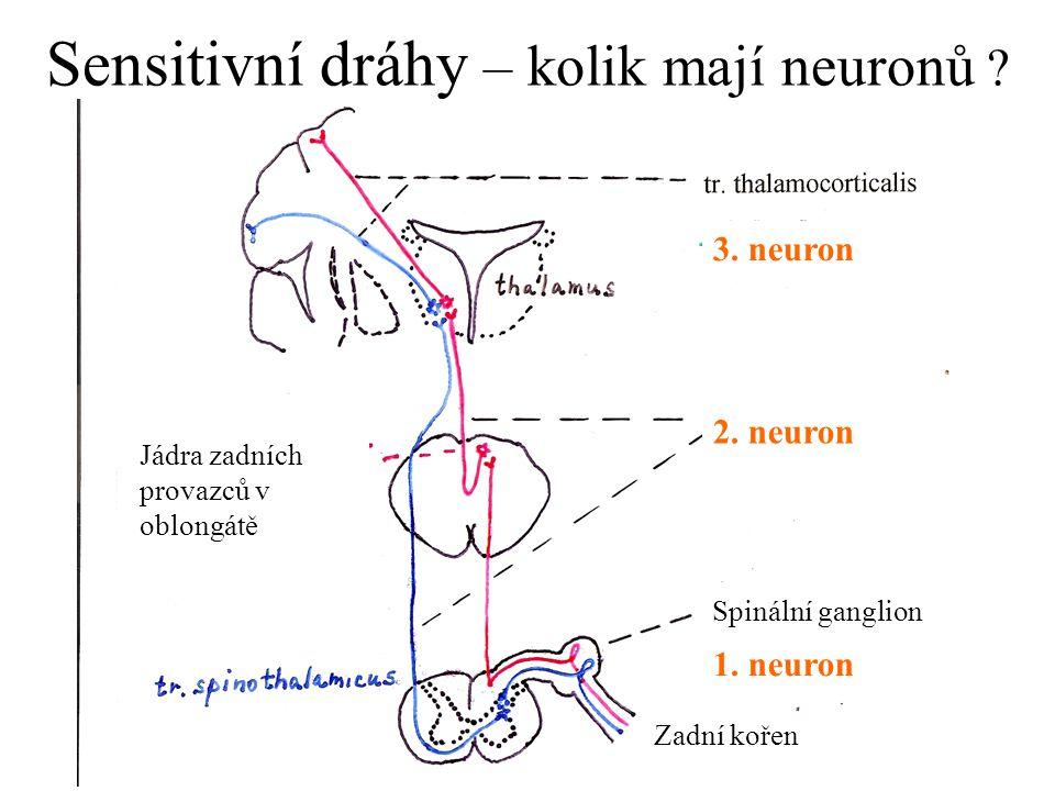 Sensitivní dráhy – kolik mají neuronů