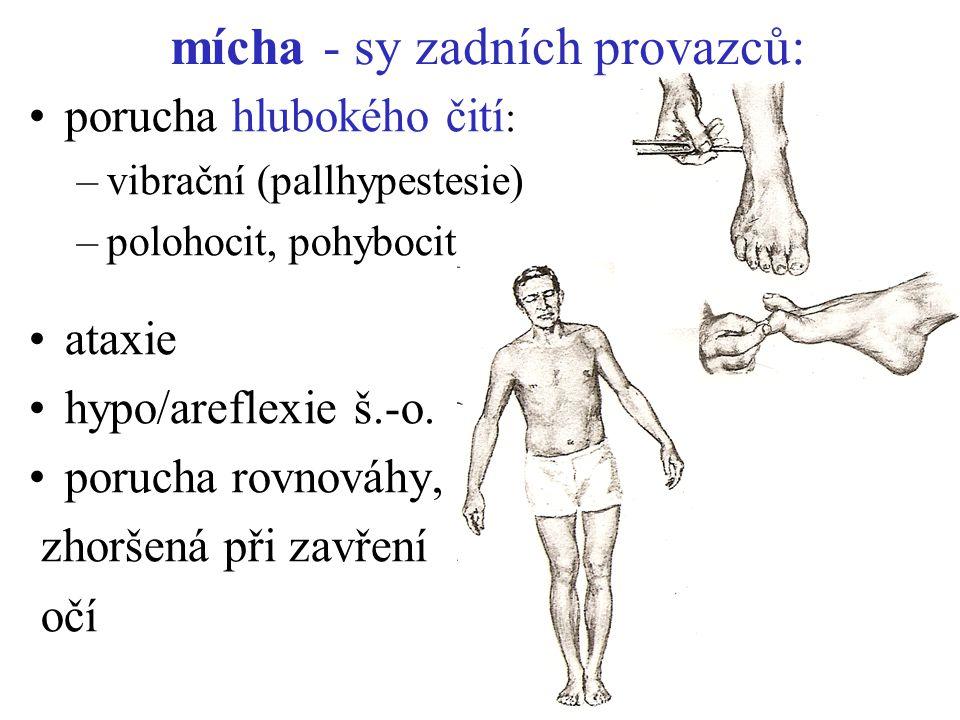 mícha - sy zadních provazců: