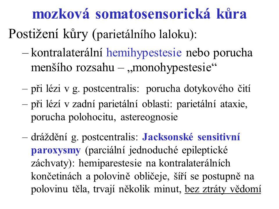 mozková somatosensorická kůra