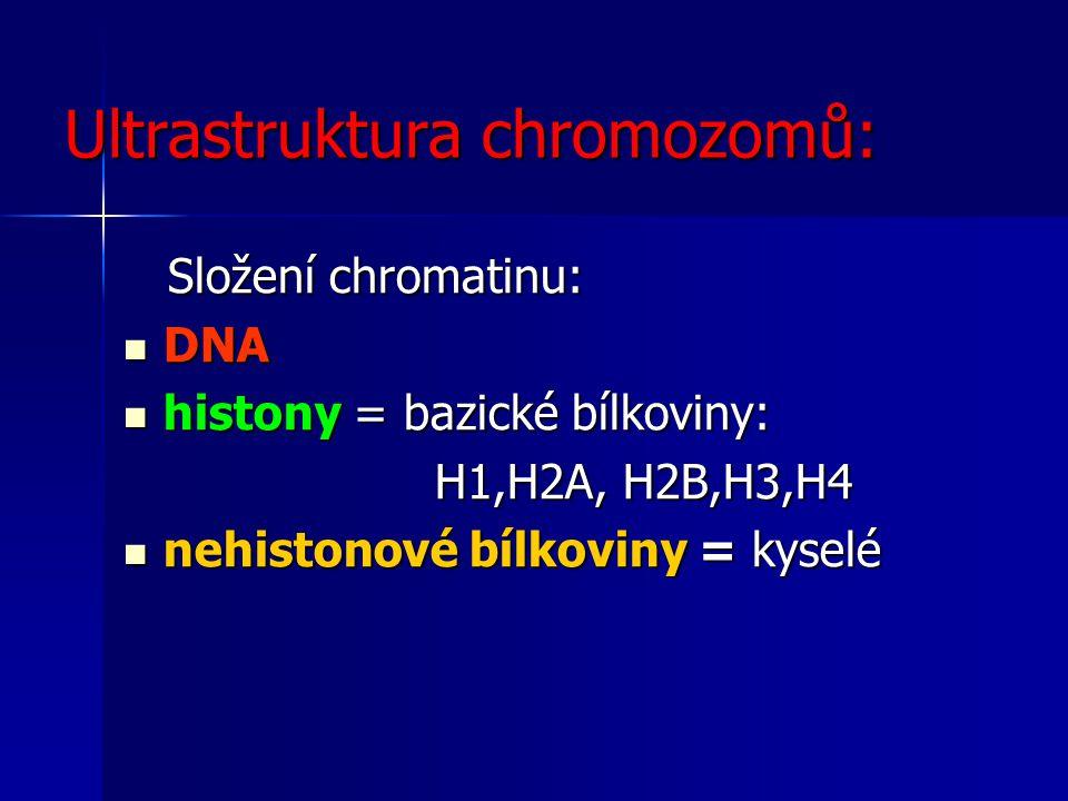 Ultrastruktura chromozomů: