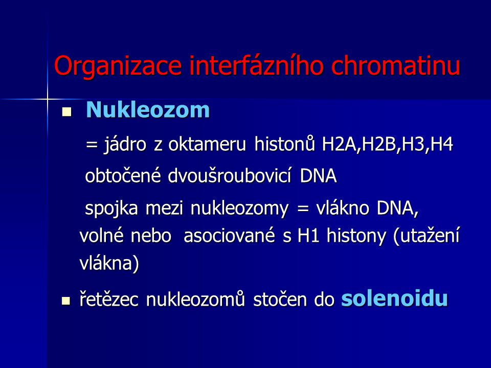 Organizace interfázního chromatinu
