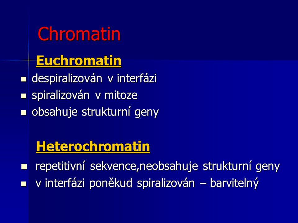 Chromatin Euchromatin Heterochromatin
