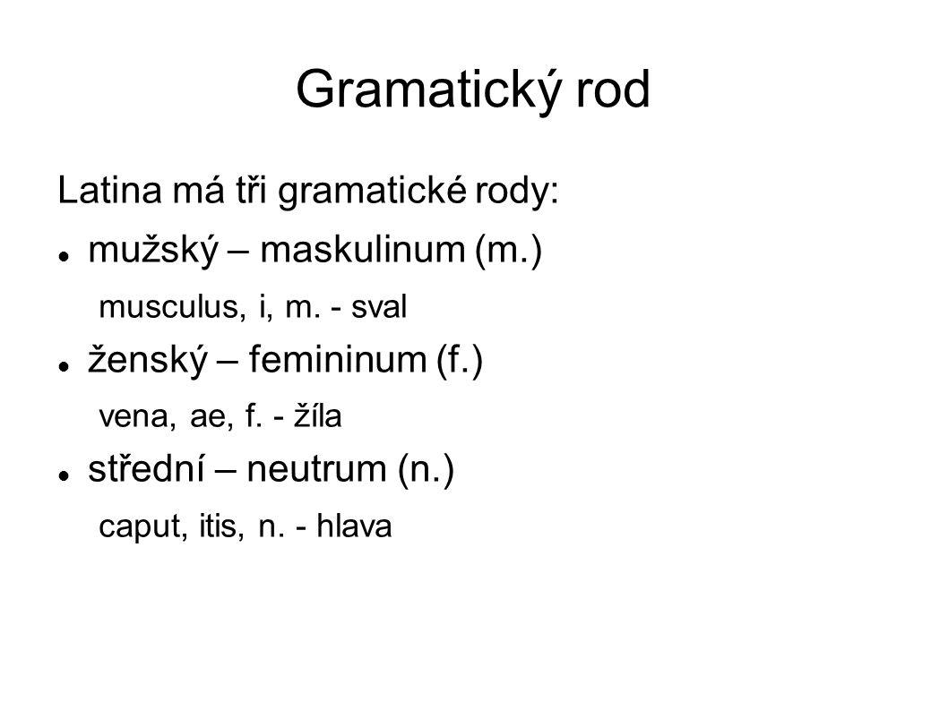 Gramatický rod Latina má tři gramatické rody: mužský – maskulinum (m.)