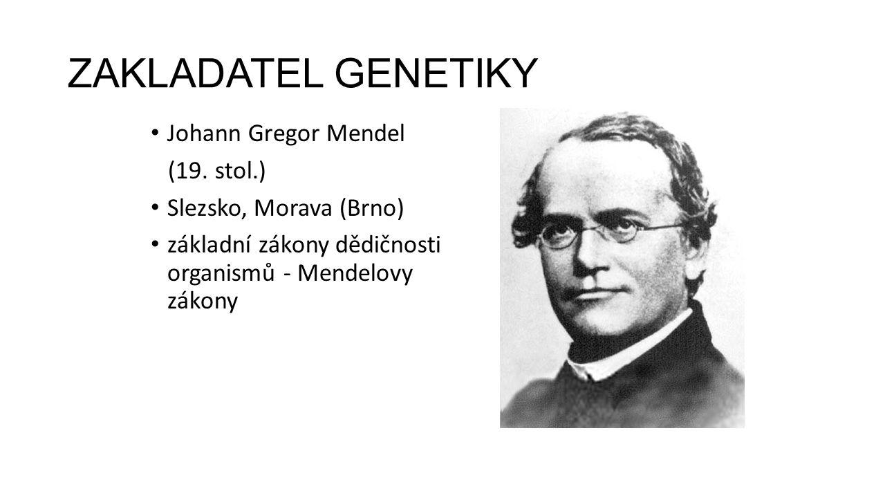 ZAKLADATEL GENETIKY Johann Gregor Mendel (19. stol.)