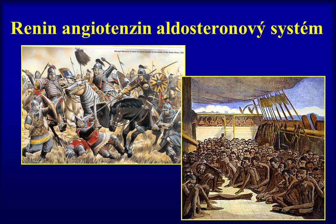 Renin angiotenzin aldosteronový systém