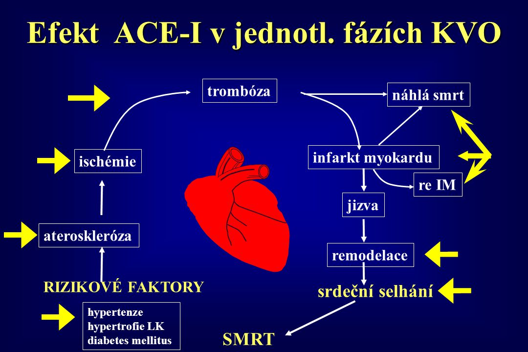 Efekt ACE-I v jednotl. fázích KVO