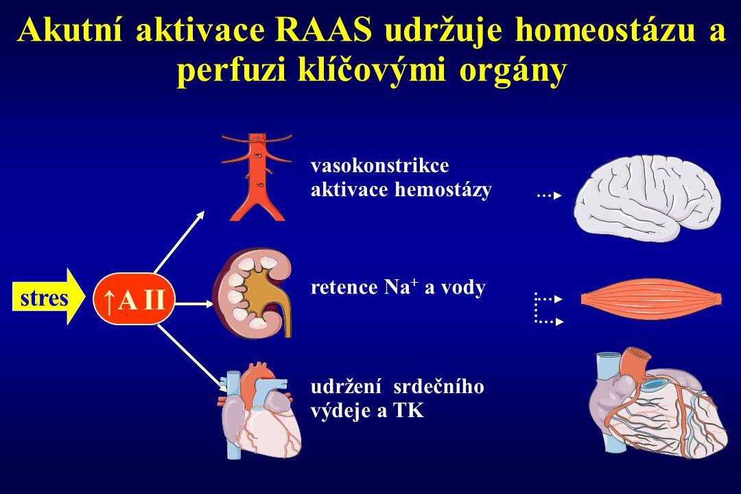 Akutní aktivace RAAS udržuje homeostázu a perfuzi klíčovými orgány
