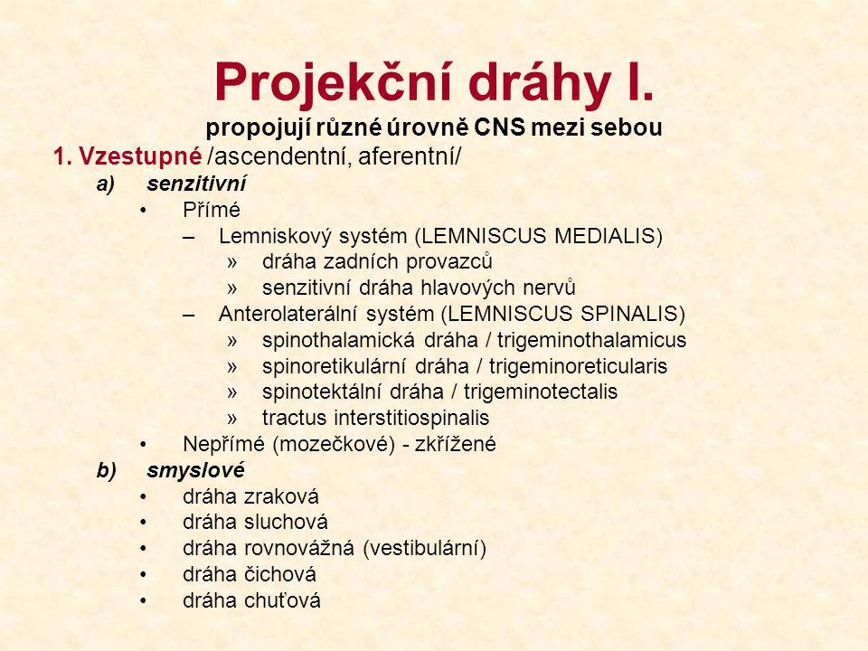 propojují různé úrovně CNS mezi sebou