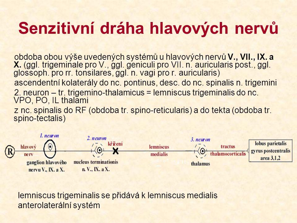Senzitivní dráha hlavových nervů