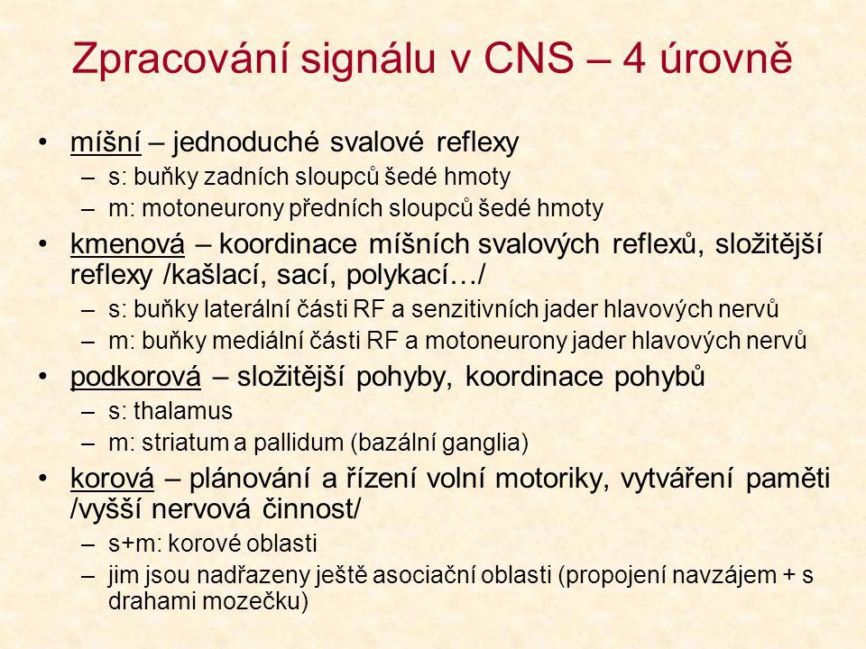 Zpracování signálu v CNS – 4 úrovně