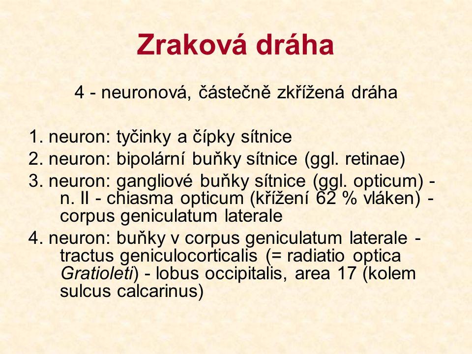 4 - neuronová, částečně zkřížená dráha