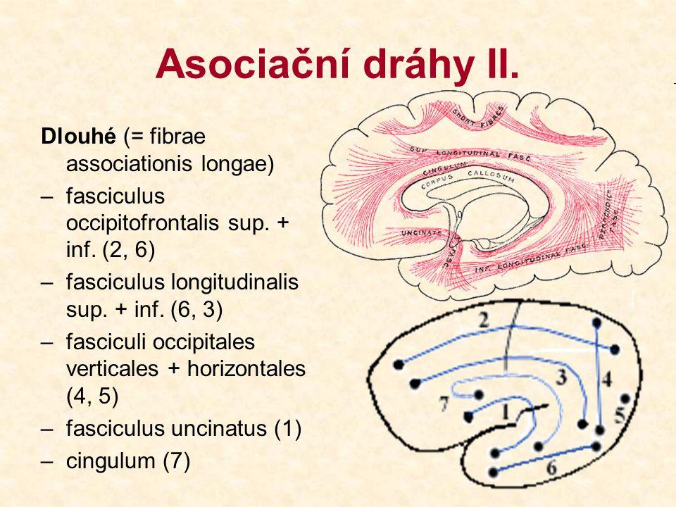 Asociační dráhy II. Dlouhé (= fibrae associationis longae)