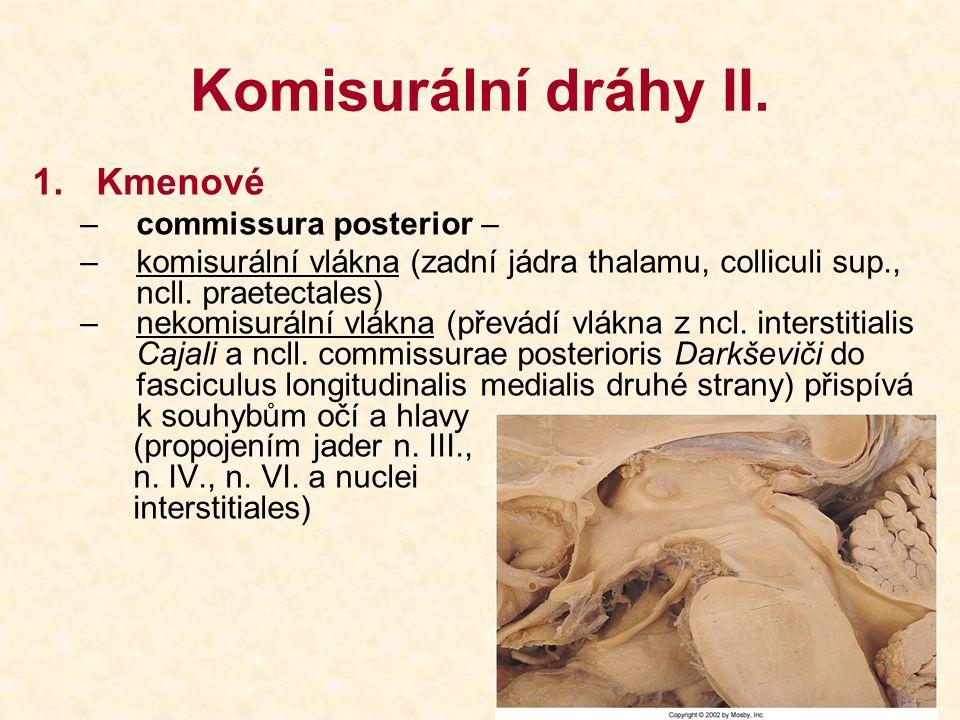 Komisurální dráhy II. Kmenové commissura posterior –