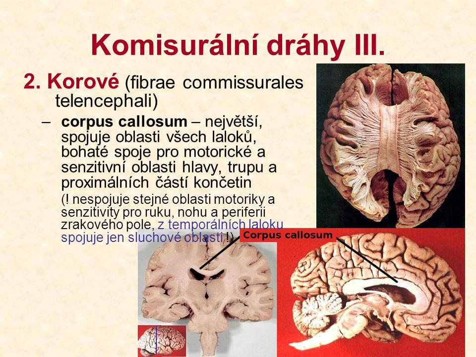 Komisurální dráhy III. 2. Korové (fibrae commissurales telencephali)