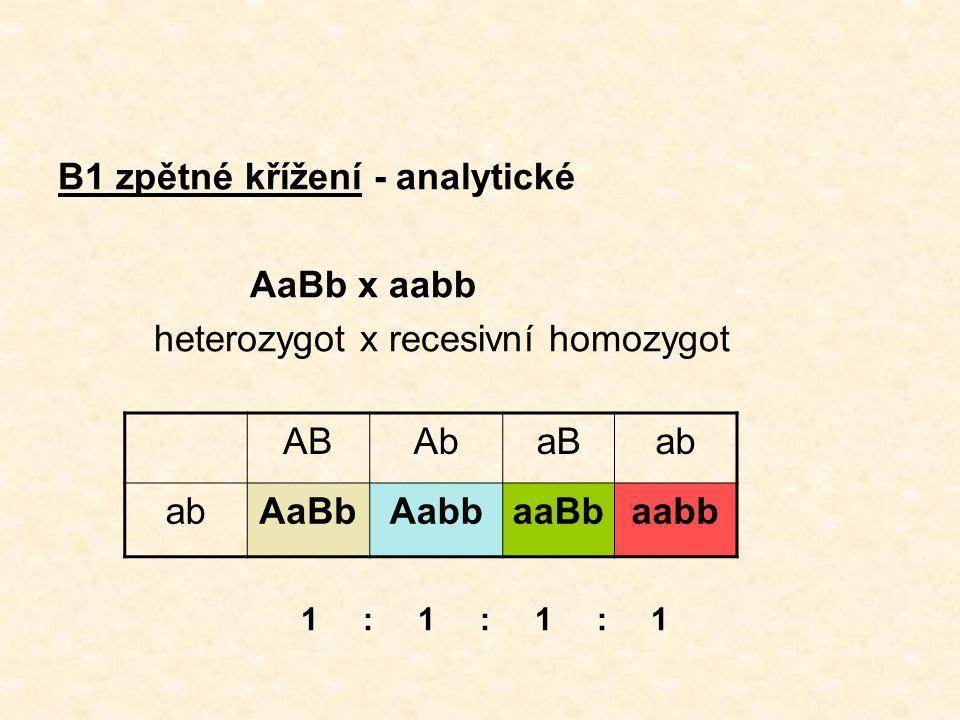 B1 zpětné křížení - analytické AaBb x aabb