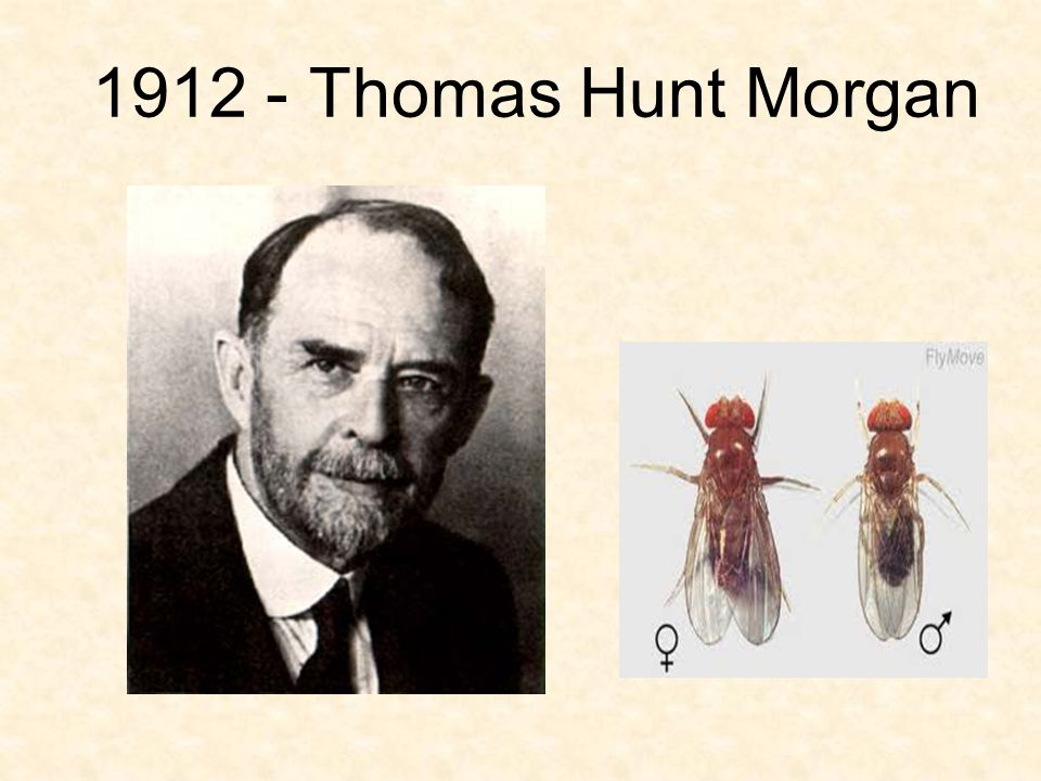 1912 - Thomas Hunt Morgan