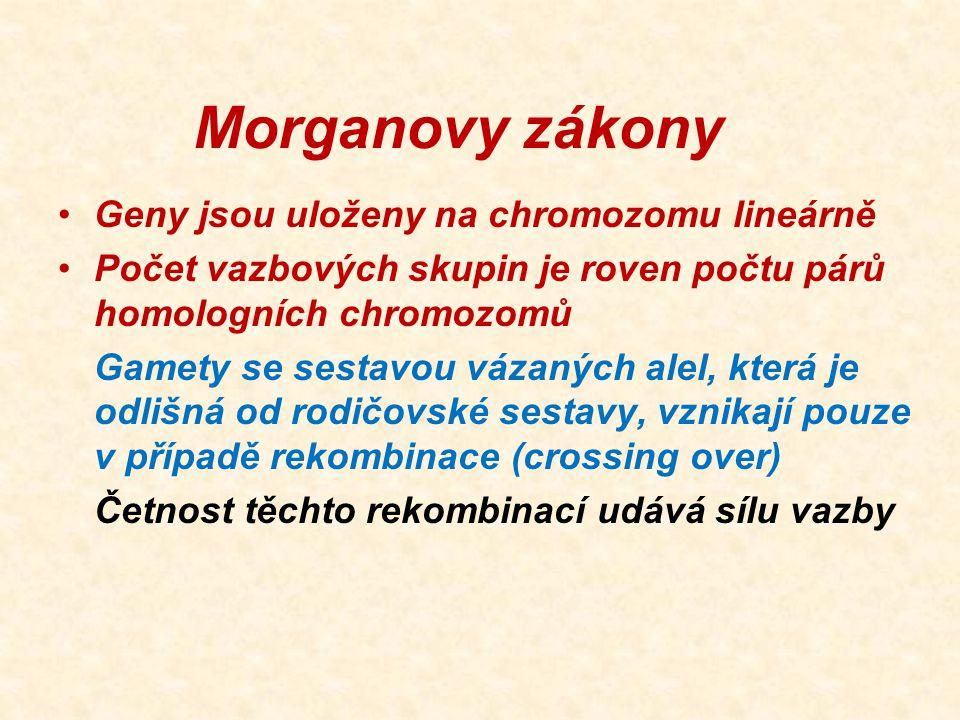 Morganovy zákony Geny jsou uloženy na chromozomu lineárně