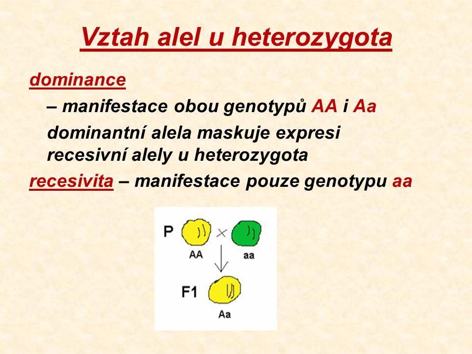 Vztah alel u heterozygota