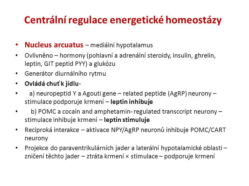 Centrální regulace energetické homeostázy