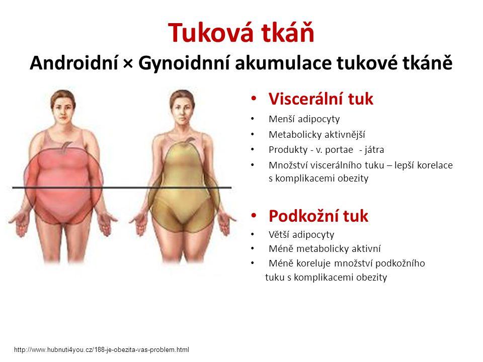 Tuková tkáň Androidní × Gynoidnní akumulace tukové tkáně