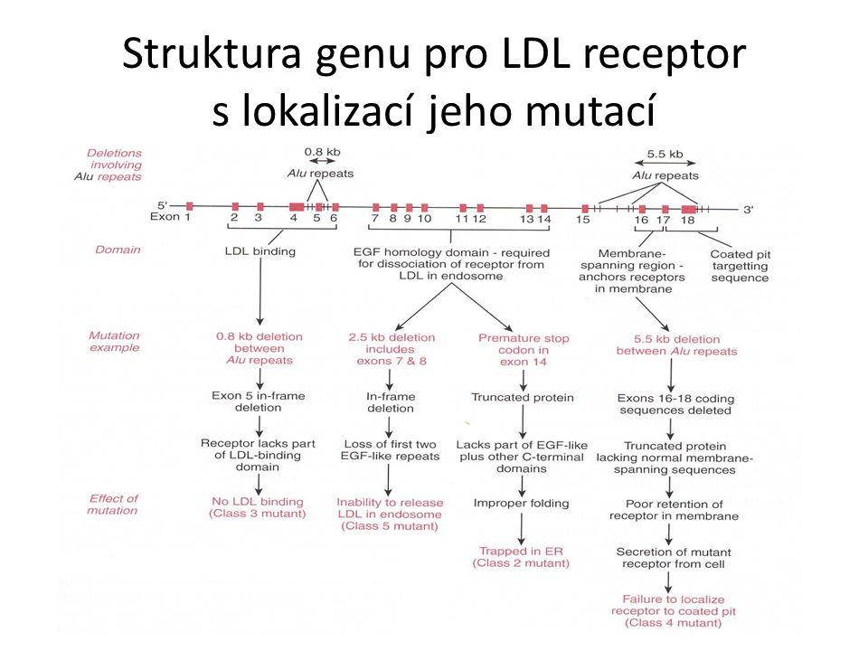 Struktura genu pro LDL receptor s lokalizací jeho mutací