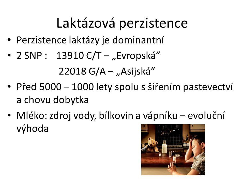 Laktázová perzistence
