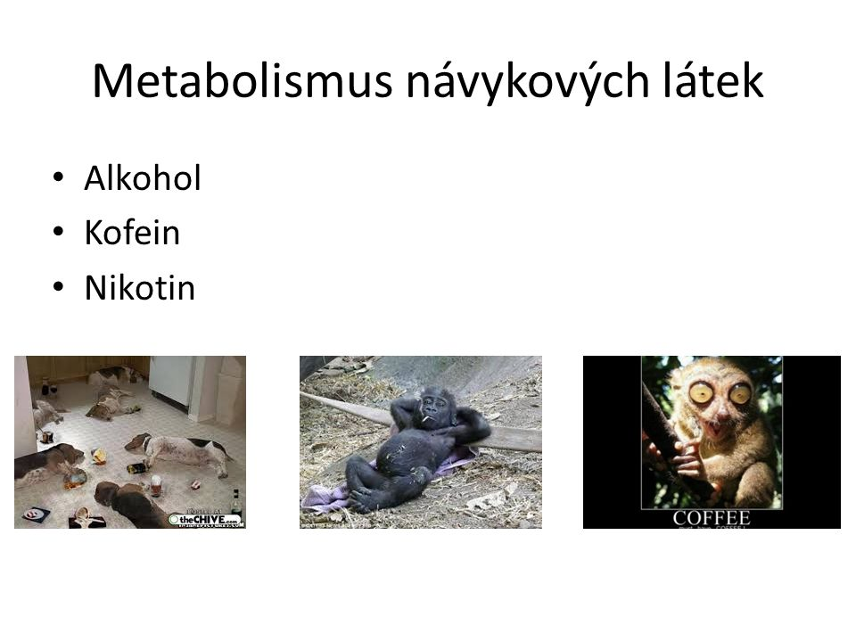 Metabolismus návykových látek