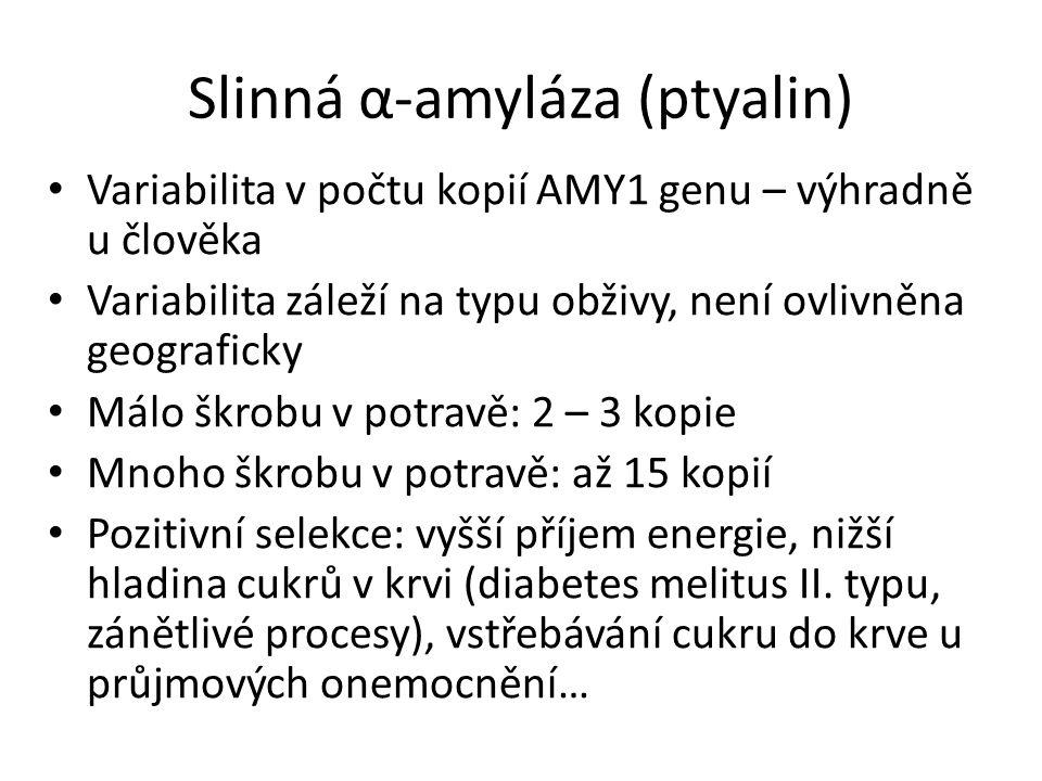 Slinná α-amyláza (ptyalin)