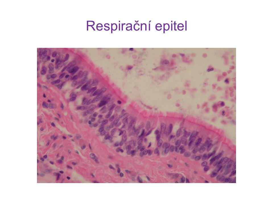 Respirační epitel