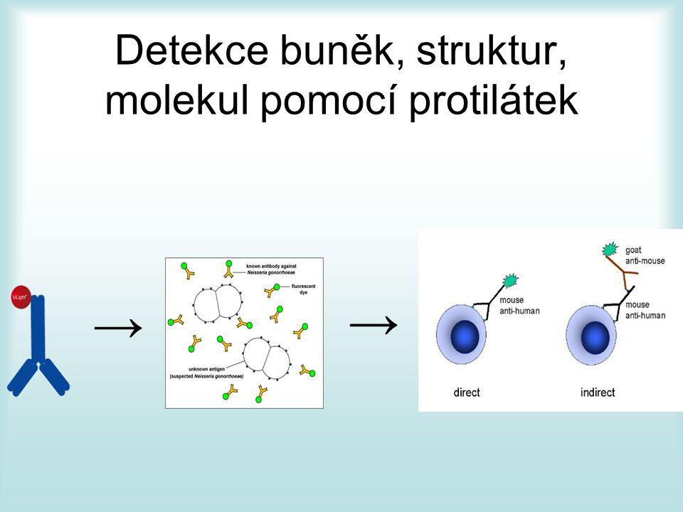 Detekce buněk, struktur, molekul pomocí protilátek