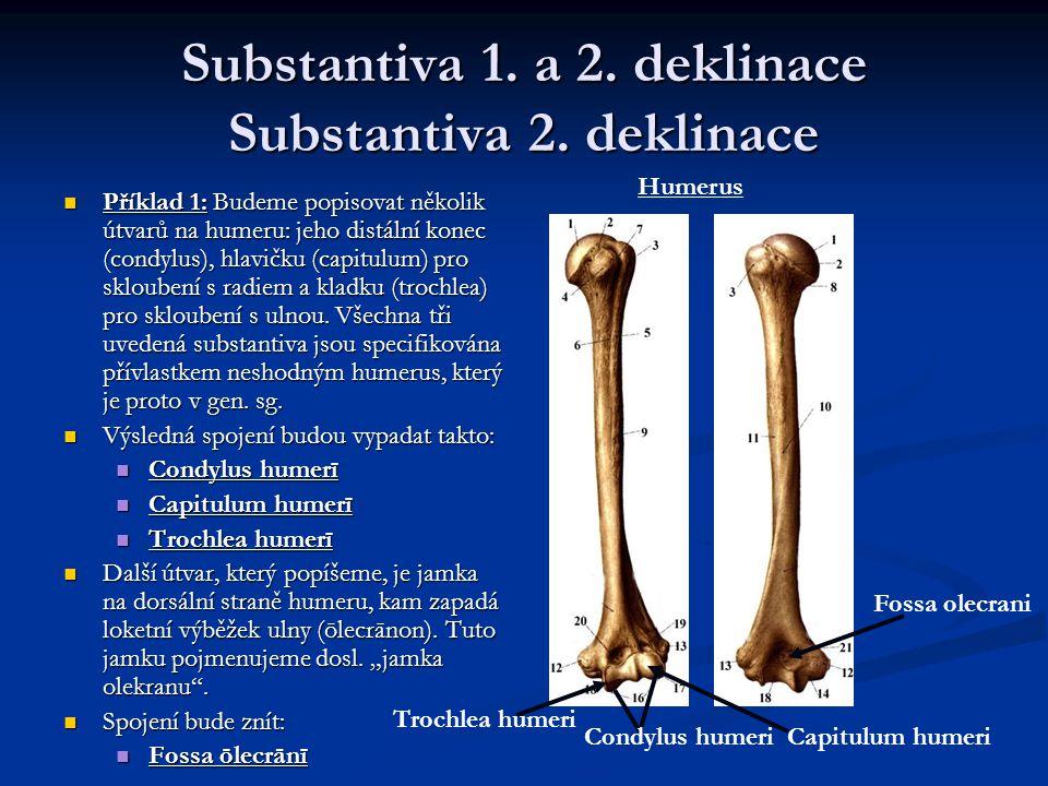 Substantiva 1. a 2. deklinace Substantiva 2. deklinace