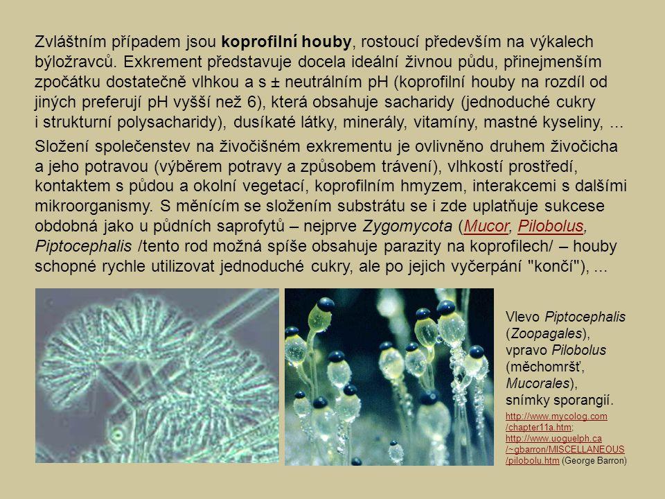 Zvláštním případem jsou koprofilní houby, rostoucí především na výkalech býložravců. Exkrement představuje docela ideální živnou půdu, přinejmenším zpočátku dostatečně vlhkou a s ± neutrálním pH (koprofilní houby na rozdíl od jiných preferují pH vyšší než 6), která obsahuje sacharidy (jednoduché cukry i strukturní polysacharidy), dusíkaté látky, minerály, vitamíny, mastné kyseliny, ...
