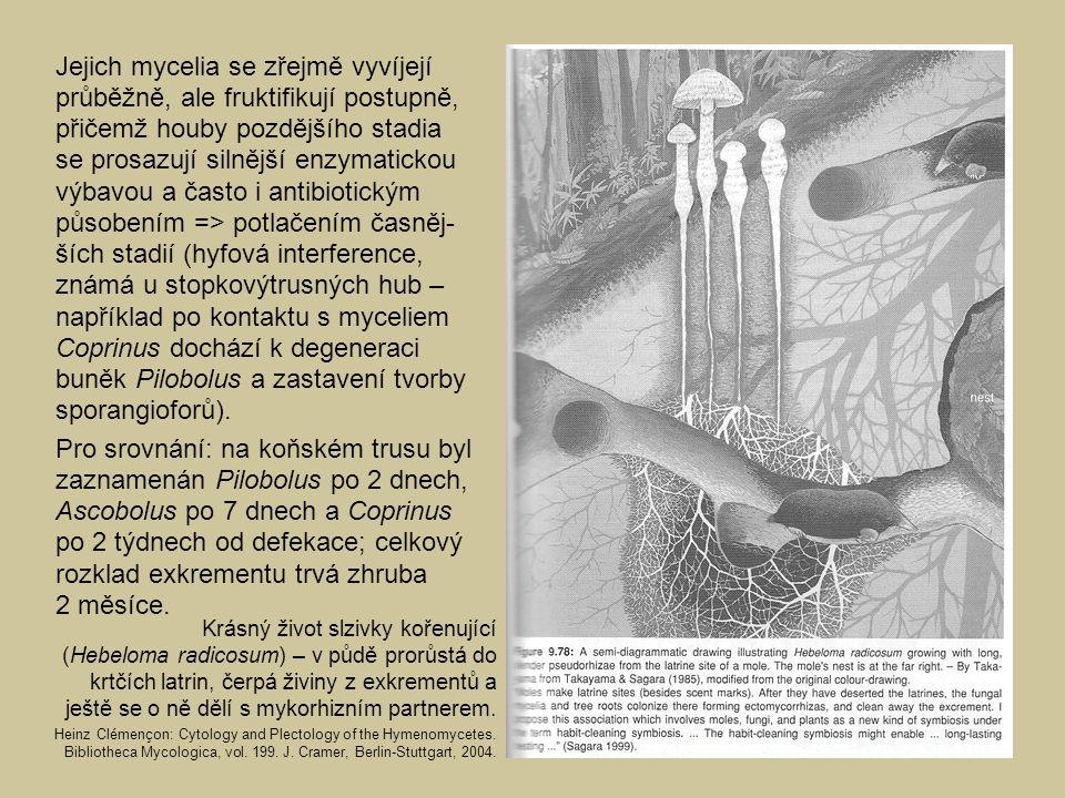 Jejich mycelia se zřejmě vyvíjejí průběžně, ale fruktifikují postupně, přičemž houby pozdějšího stadia se prosazují silnější enzymatickou výbavou a často i antibiotickým působením => potlačením časněj-ších stadií (hyfová interference, známá u stopkovýtrusných hub – například po kontaktu s myceliem Coprinus dochází k degeneraci buněk Pilobolus a zastavení tvorby sporangioforů).