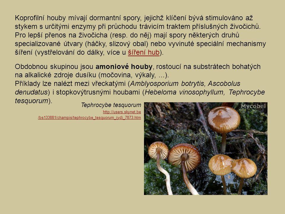 Koprofilní houby mívají dormantní spory, jejichž klíčení bývá stimulováno až stykem s určitými enzymy při průchodu trávicím traktem příslušných živočichů. Pro lepší přenos na živočicha (resp. do něj) mají spory některých druhů specializované útvary (háčky, slizový obal) nebo vyvinuté speciální mechanismy šíření (vystřelování do dálky, více u šíření hub).