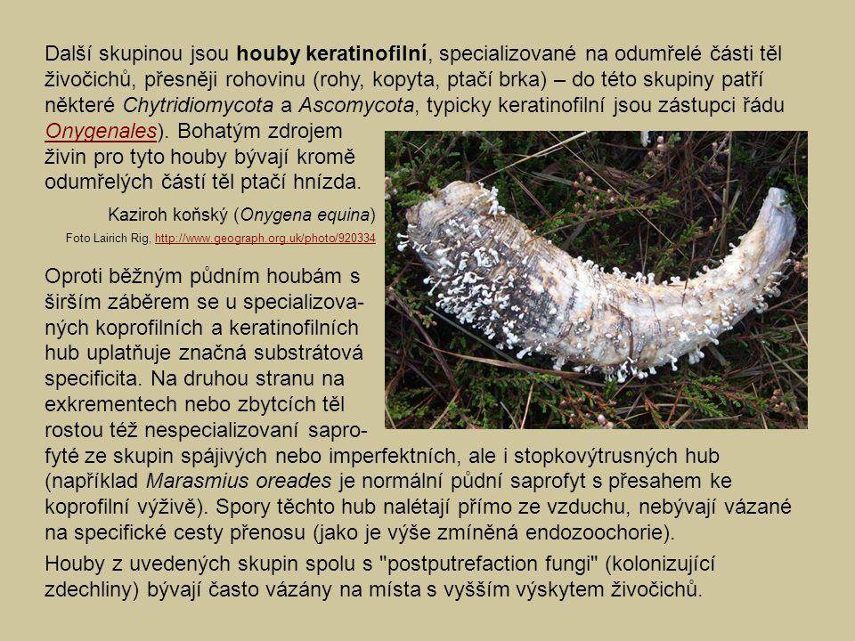živin pro tyto houby bývají kromě odumřelých částí těl ptačí hnízda.