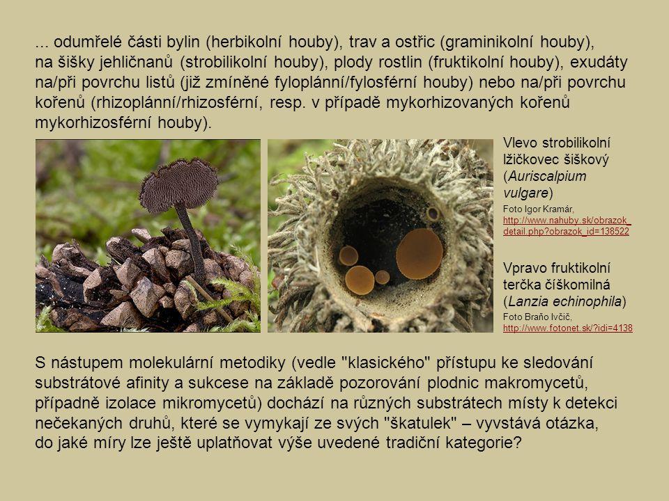 ... odumřelé části bylin (herbikolní houby), trav a ostřic (graminikolní houby), na šišky jehličnanů (strobilikolní houby), plody rostlin (fruktikolní houby), exudáty na/při povrchu listů (již zmíněné fyloplánní/fylosférní houby) nebo na/při povrchu kořenů (rhizoplánní/rhizosférní, resp. v případě mykorhizovaných kořenů mykorhizosférní houby).