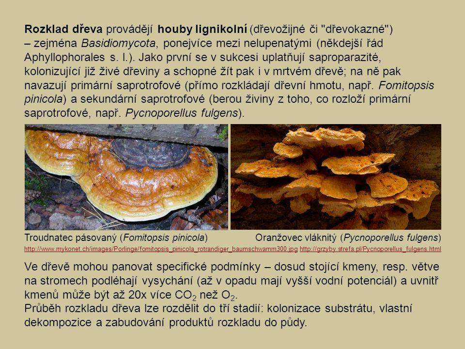 Rozklad dřeva provádějí houby lignikolní (dřevožijné či dřevokazné )