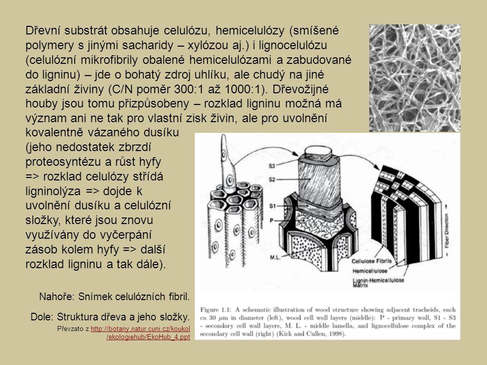 Dřevní substrát obsahuje celulózu, hemicelulózy (smíšené polymery s jinými sacharidy – xylózou aj.) i lignocelulózu (celulózní mikrofibrily obalené hemicelulózami a zabudované do ligninu) – jde o bohatý zdroj uhlíku, ale chudý na jiné základní živiny (C/N poměr 300:1 až 1000:1). Dřevožijné houby jsou tomu přizpůsobeny – rozklad ligninu možná má význam ani ne tak pro vlastní zisk živin, ale pro uvolnění