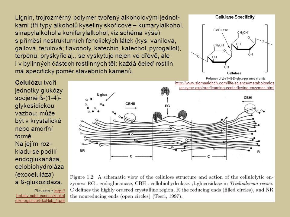 Lignin, trojrozměrný polymer tvořený alkoholovými jednot-kami (tři typy alkoholů kyseliny skořicové – kumarylalkohol, sinapylalkohol a koniferylalkohol, viz schéma výše) s příměsí nestrukturních fenolických látek (kys. vanilová, gallová, ferulová; flavonoly, katechin, katechol, pyrogallol), terpenů, pryskyřic aj., se vyskytuje nejen ve dřevě, ale i v bylinných částech rostlinných těl; každá čeleď rostlin má specifický poměr stavebních kamenů.