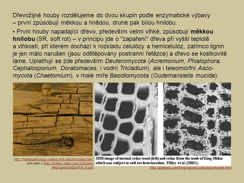 Dřevožijné houby rozdělujeme do dvou skupin podle enzymatické výbavy