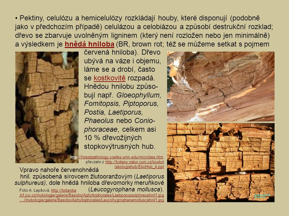 • Pektiny, celulózu a hemicelulózy rozkládají houby, které disponují (podobně jako v předchozím případě) celulázou a celobiázou a způsobí destrukční rozklad; dřevo se zbarvuje uvolněným ligninem (který není rozložen nebo jen minimálně) a výsledkem je hnědá hniloba (BR, brown rot; též se můžeme setkat s pojmem